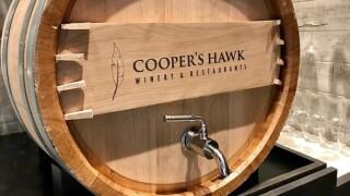 WPTV-COOPERS-HAWK.jpg