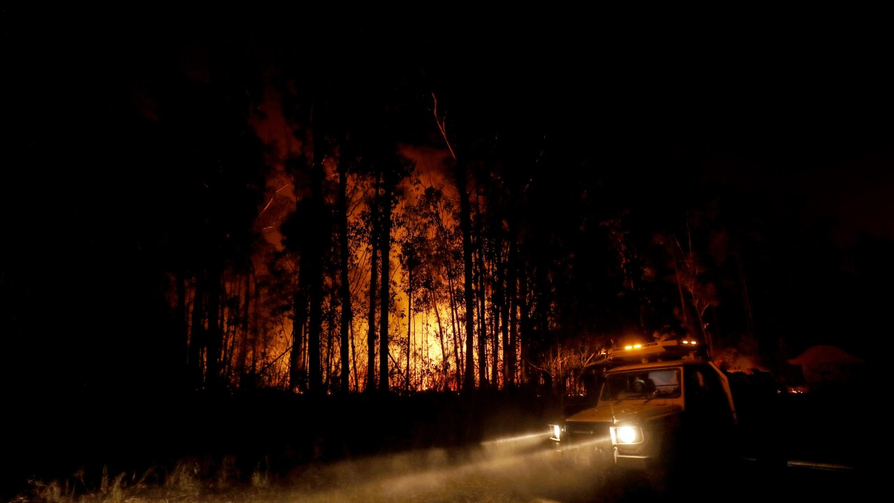 Here's how you can help the victims of the Australian wildfires