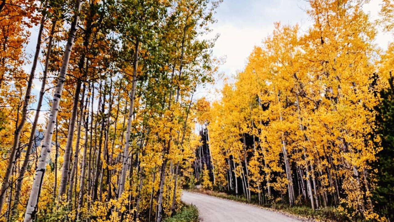 Want To See Colorado S Gold Aspens Here Are The Best Hikes Drives To See The Fall Foliage