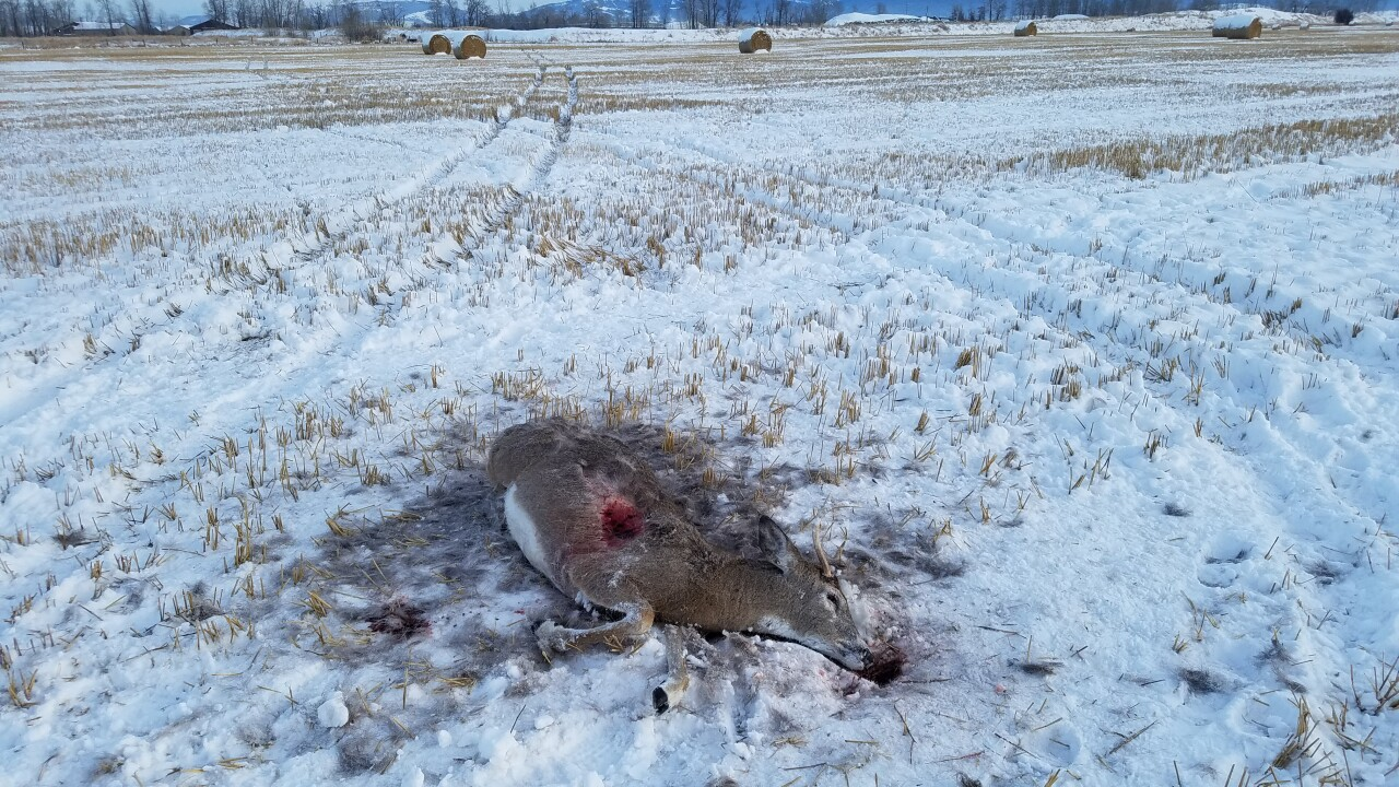 Big game poaching cases reported near Norris, Three Forks and Four Corners