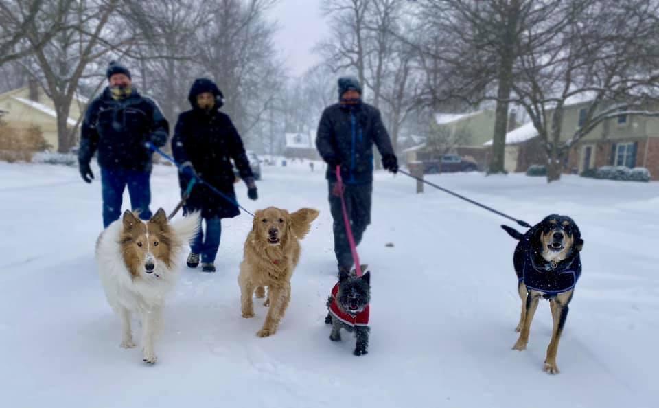 snowdogwalk.jpg
