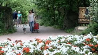 Cincinnati Zoo reopen after coronavirus shutdown
