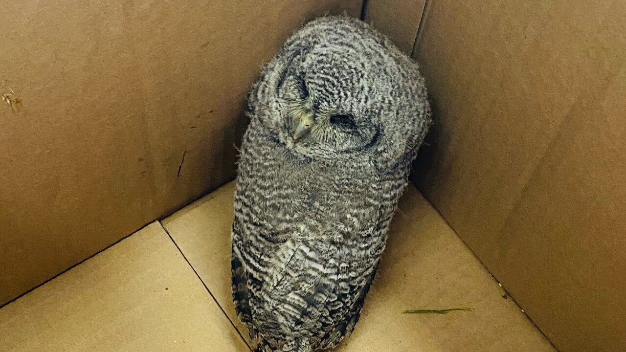 Salt Lake City fire crew rescues injured owl