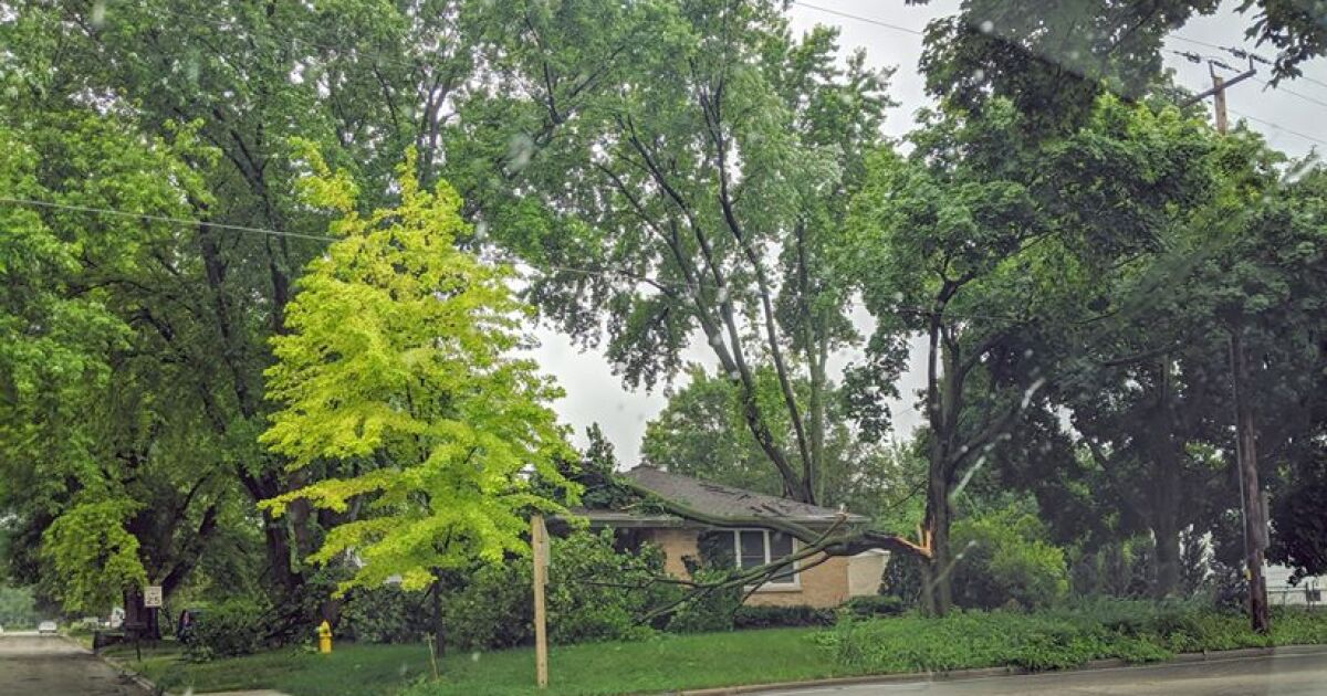 Severe weather damages trees, buildings in Wisconsin