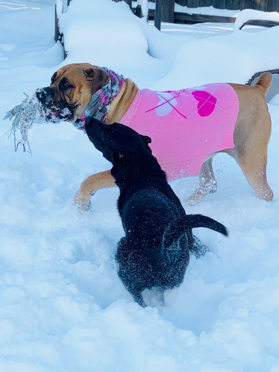 snow pups 12.jpg