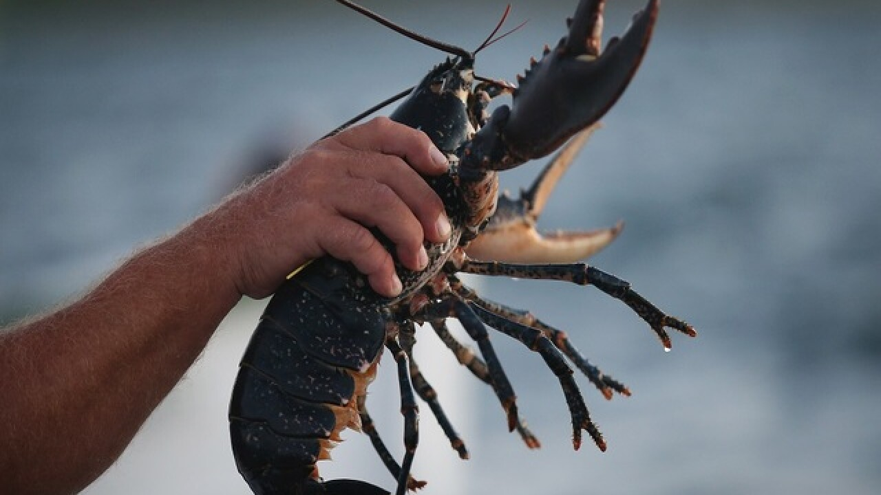 Is saving a lobster worth $225?