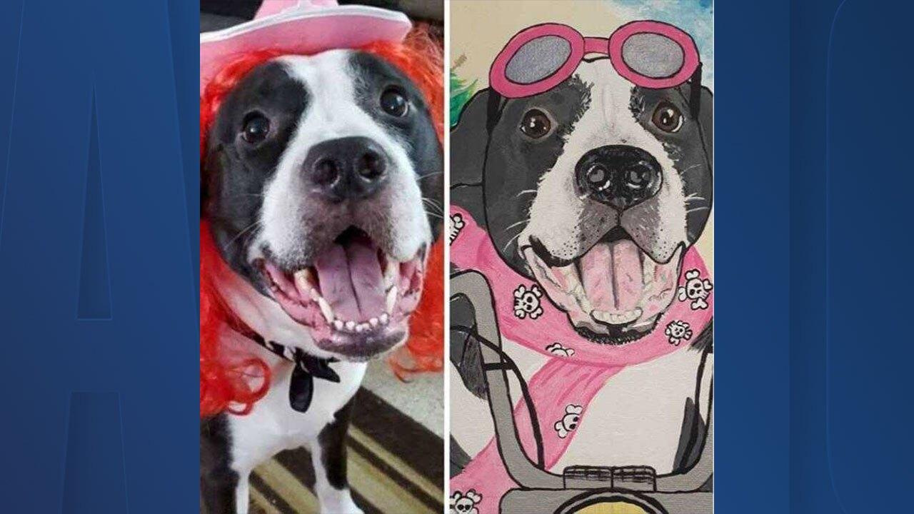 dog-portraits.jpg