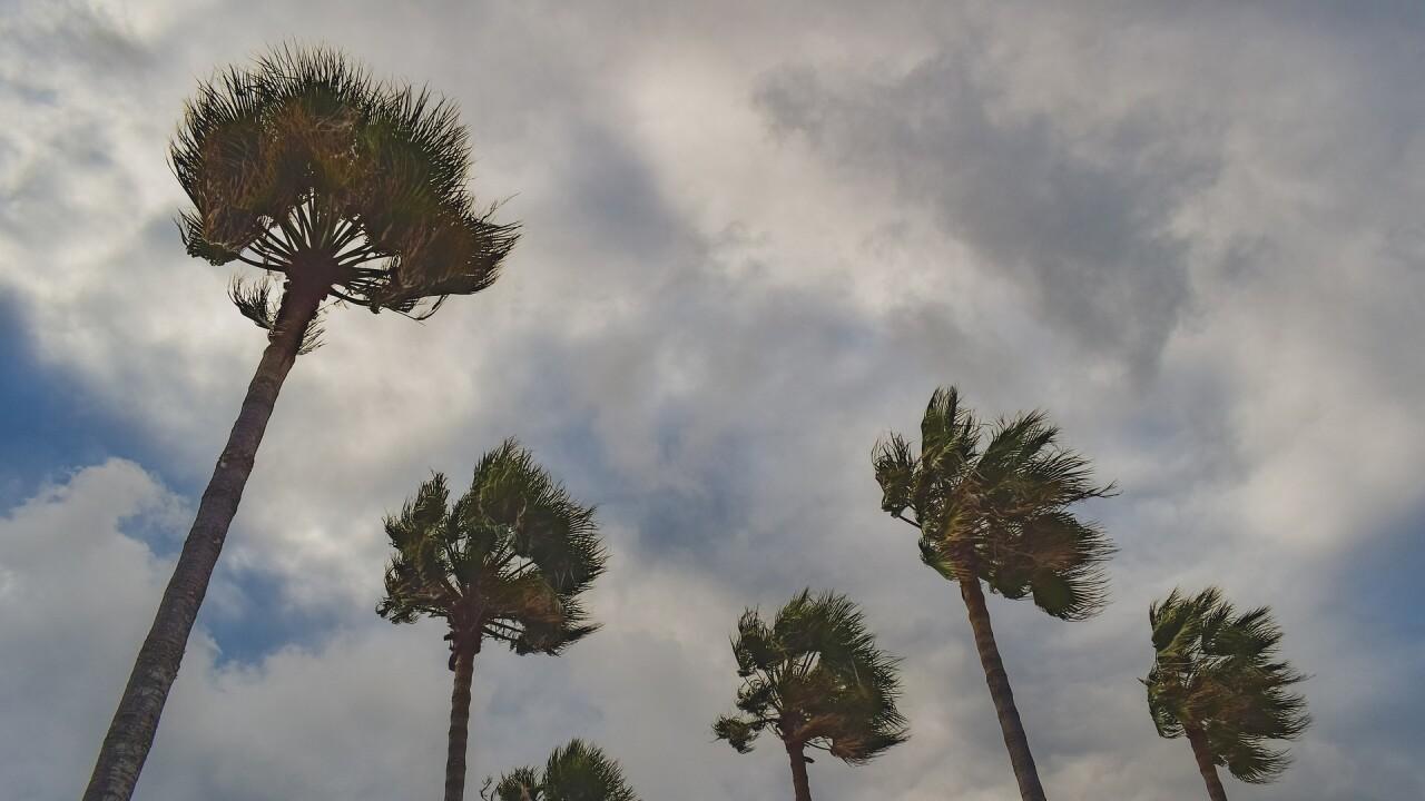 palm-trees-4840997_1920.jpg