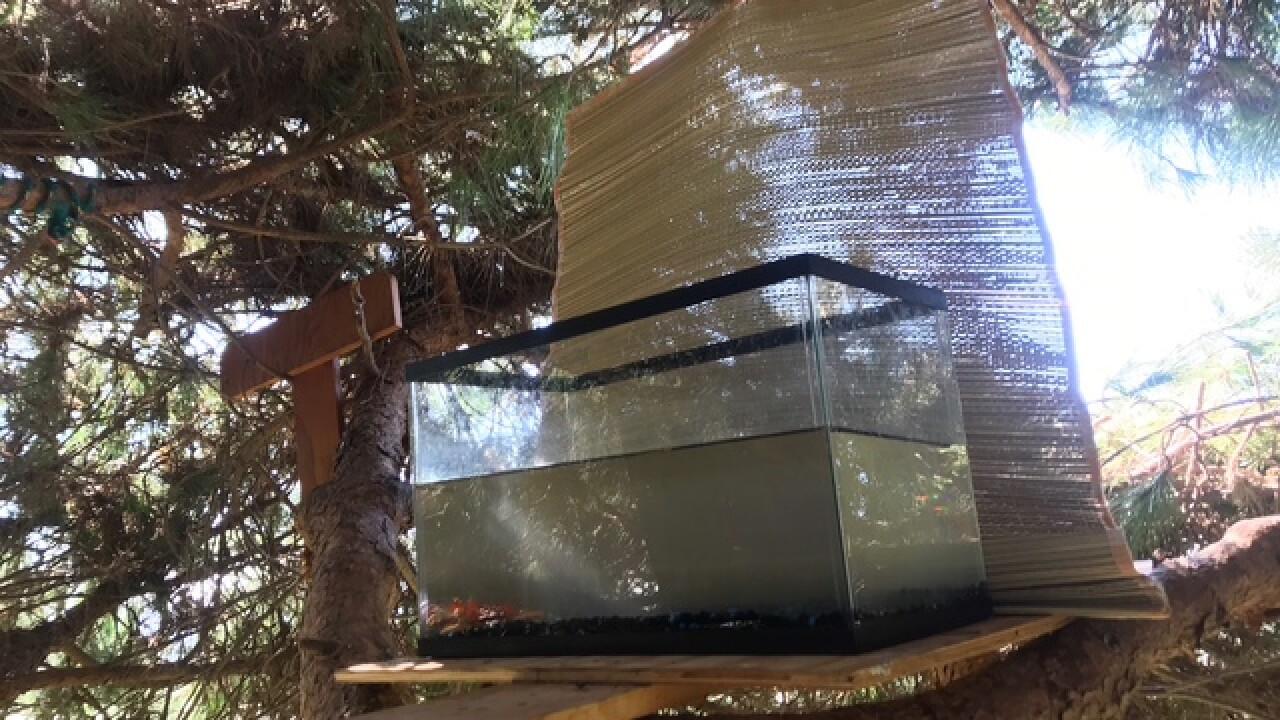 Landscapers find 3-story Dana Point tree house