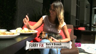 New Dog Friendly Brunch in South Florida