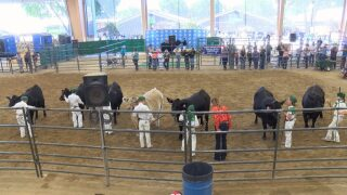 4-H, FFA students show animals at the Mid-State Fair