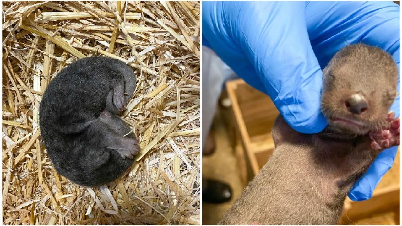 potter park zoo otter pups.jpg