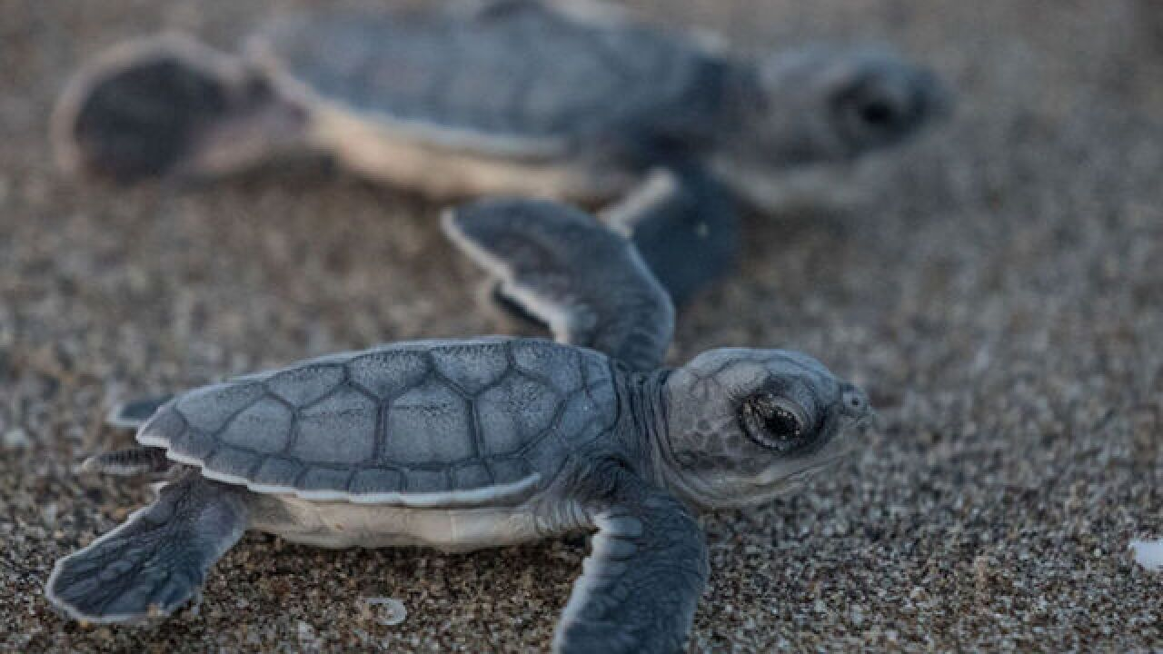 Hundreds of decomposing sea turtles were found off the Mexican coast