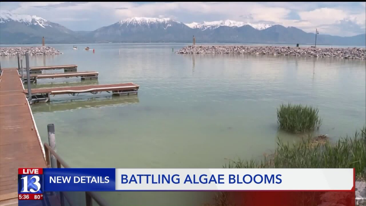 Utah Lake Commission seeks help treating toxic algal blooms