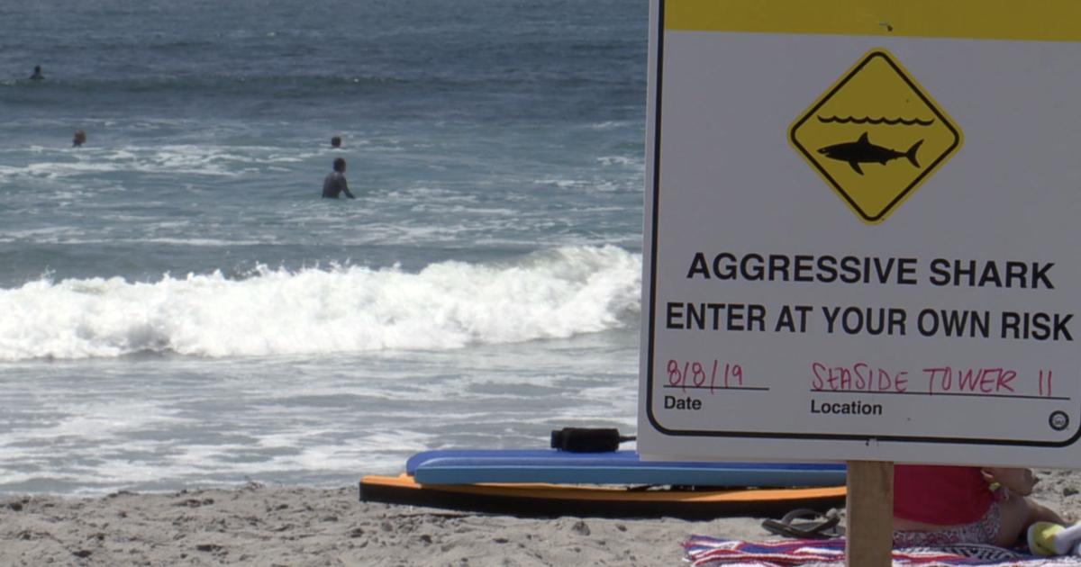North County beachgoers warned about shark