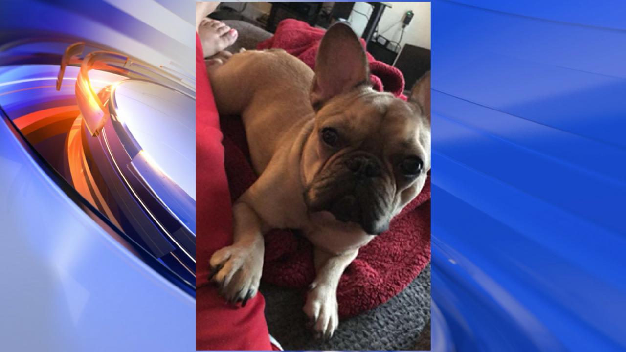 Pregnant Sailor's apartment door kicked in, dog taken in VirginiaBeach
