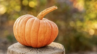 pumpkin file pixabay.jpg