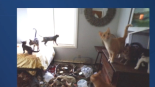 Accused cat hoarder making another mess after moving from Birmingham to western Michigan with dozens of animals