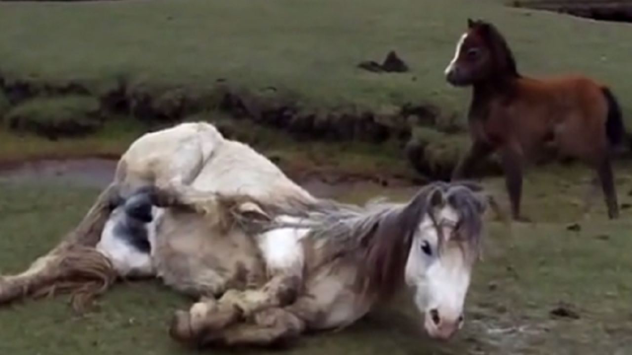 WATCH: Pony, foal heroically rescued