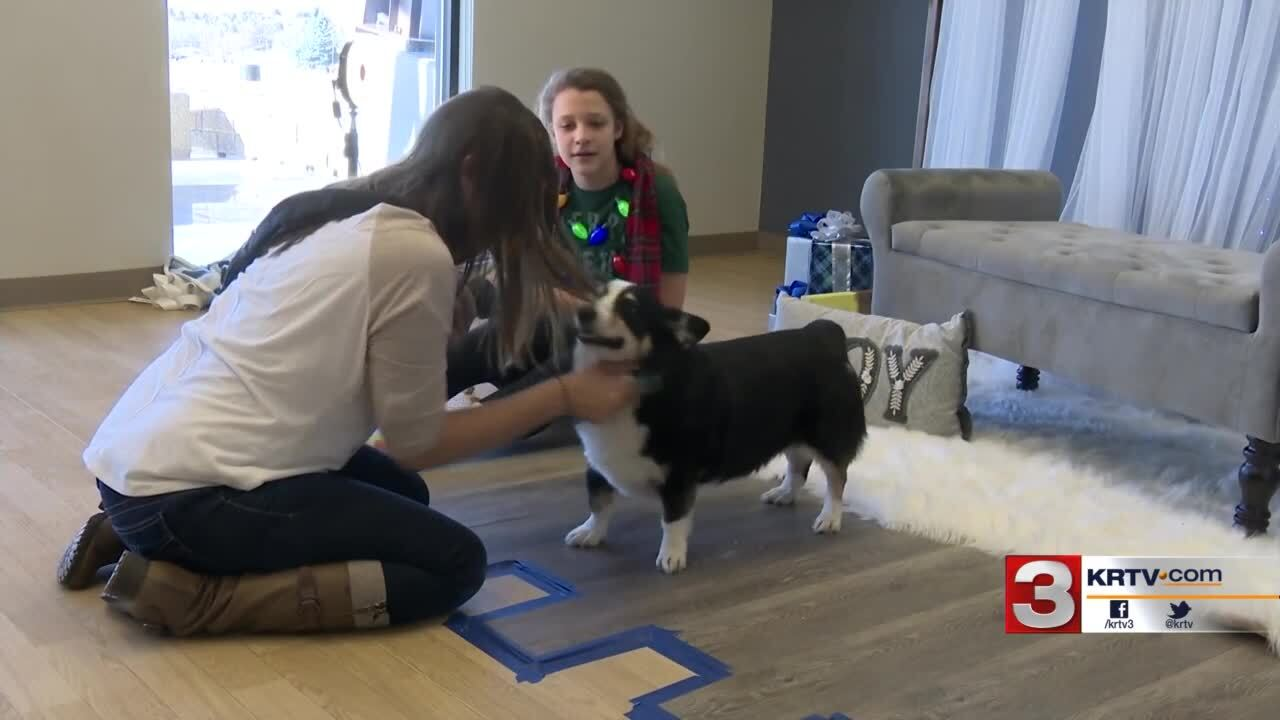 Great Falls photographer helps dogs and cats find forever homes