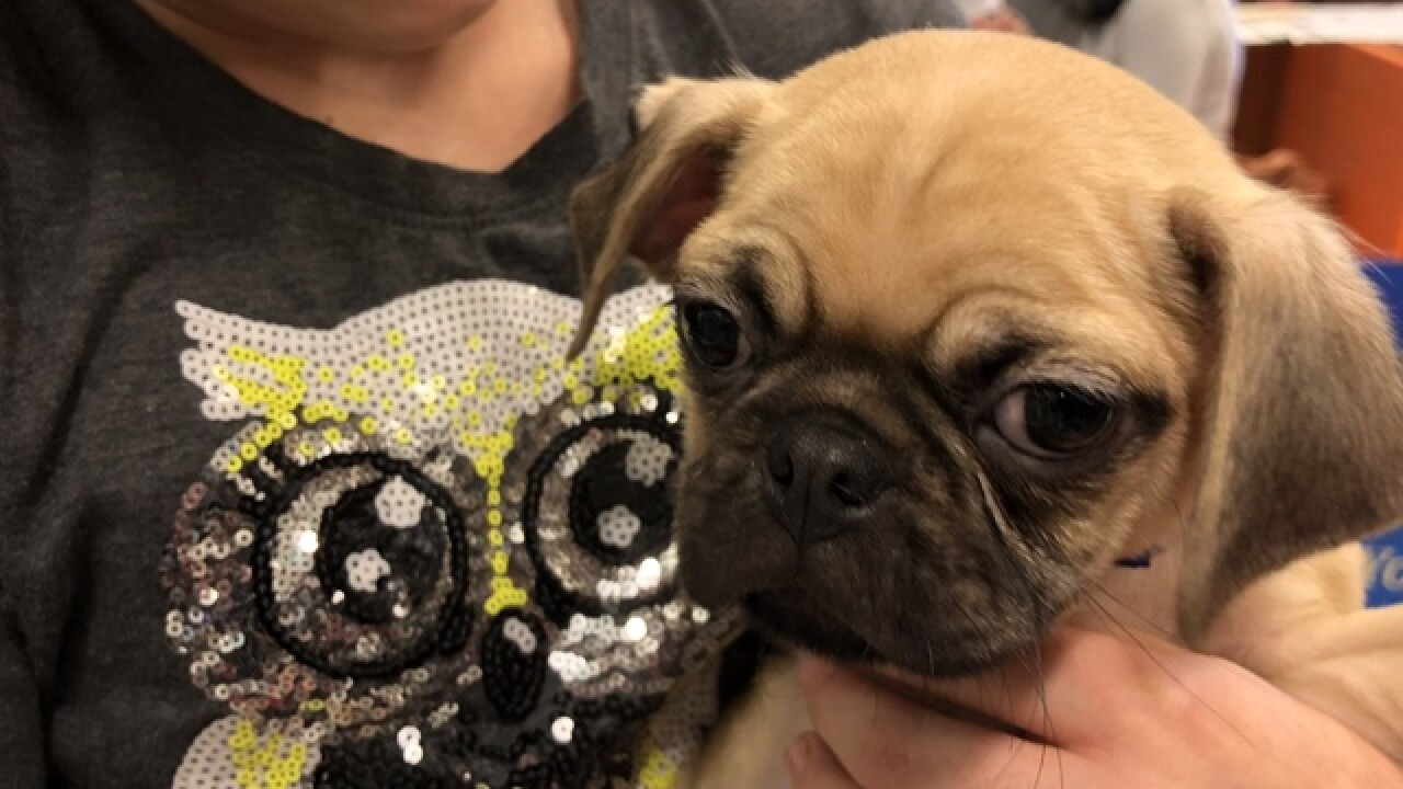 Girl battling brain tumor gets adorable puppy