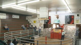 La Junta Livestock auction.jpg