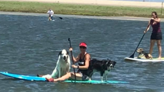 Paddleboards are provided at SUP with your PUP