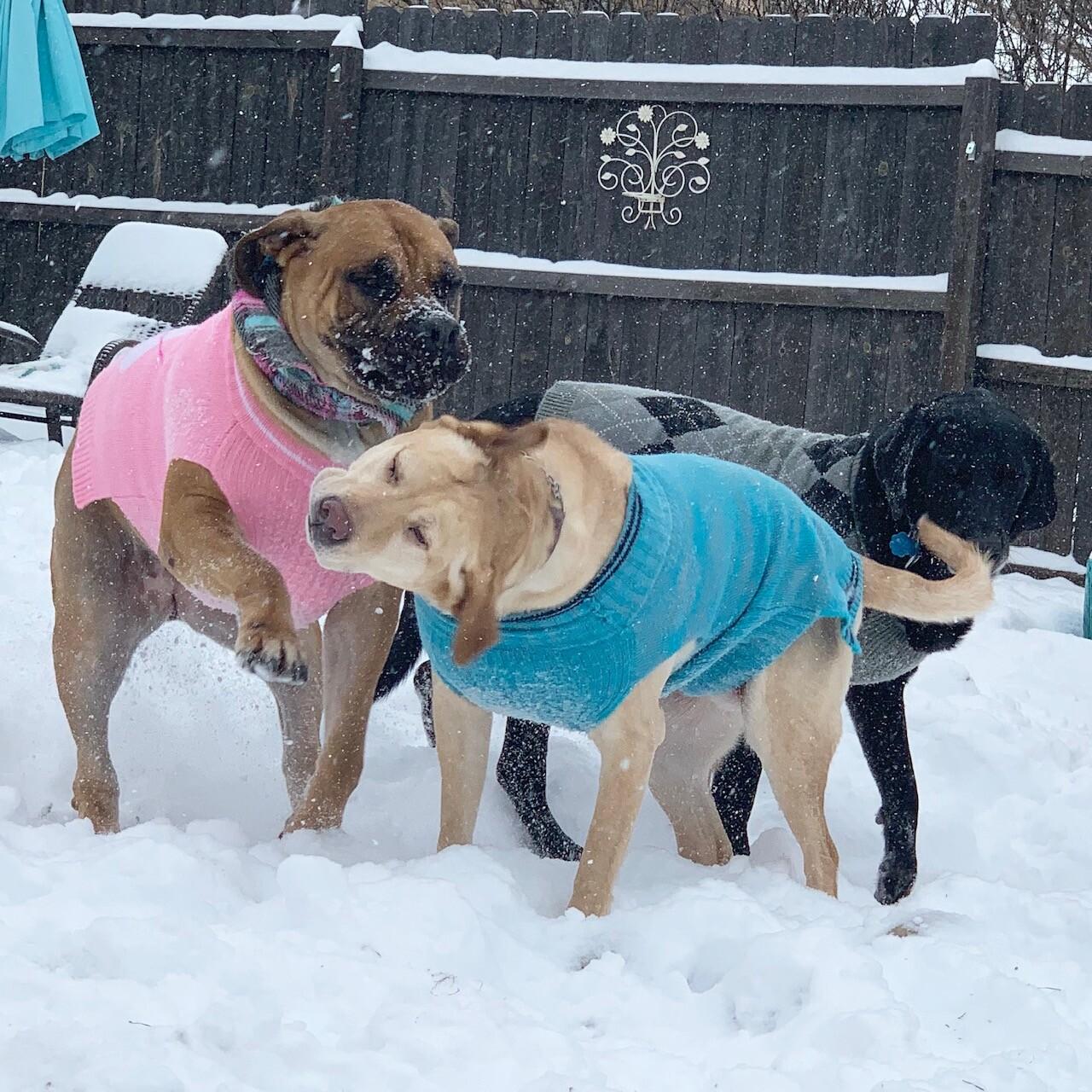 snow pups 5.jpg