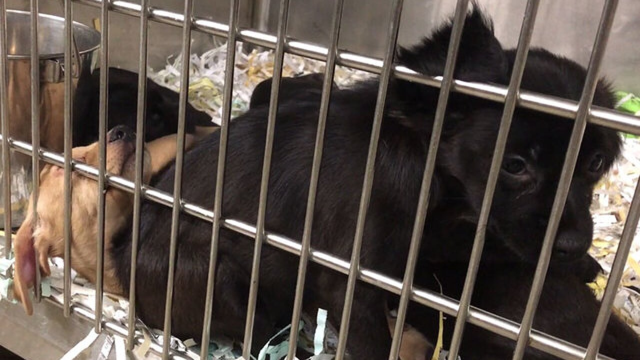 Abandoned crate of puppies found on side of road