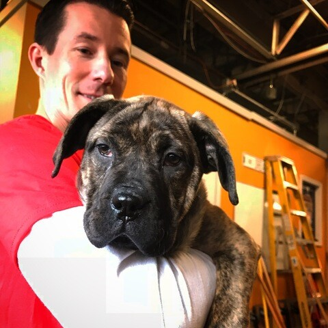 PHOTOS: Puppies up for adoption during MHS Valentine's Day Telethon
