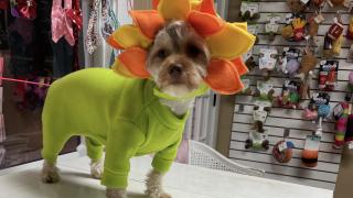 Posh Pet Boutique flower costume