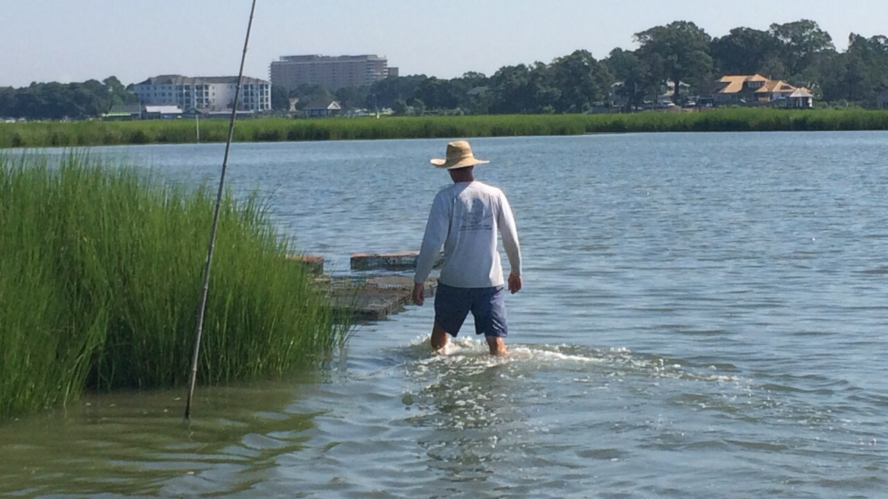 Local fisherman: Group of residents threaten harvesting of LynnhavenOysters