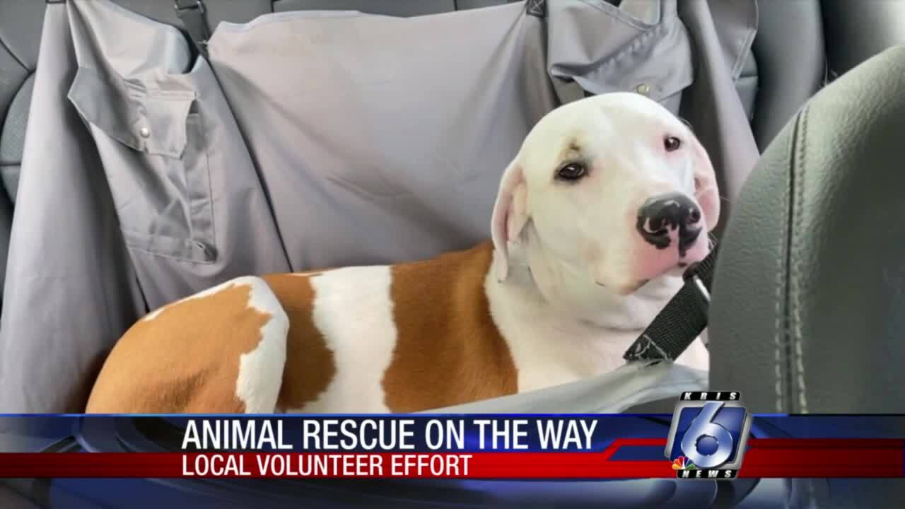 A local woman will be taking pet supplies to Louisiana to help animals affected by Ida