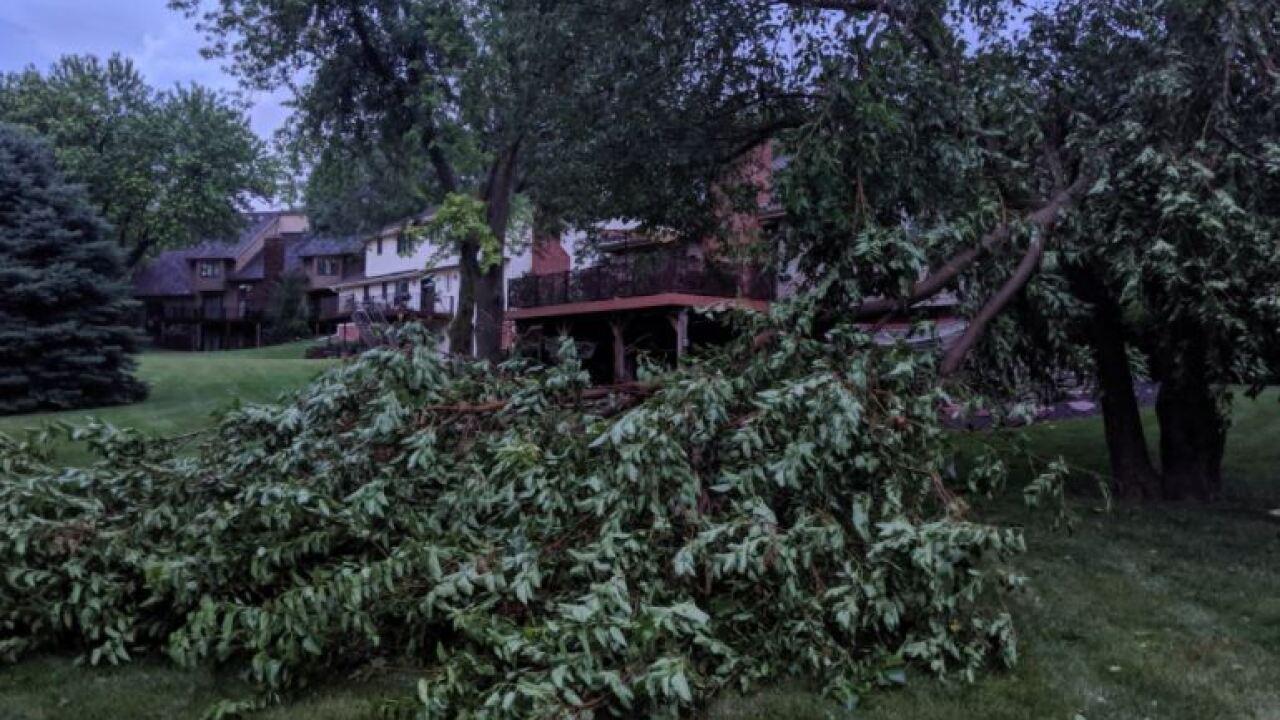 downed tree.JPG