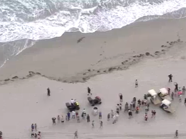 PHOTOS: Crocodile spotted on Hollywood Beach