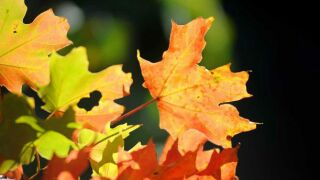 A sign that fall is near: The Brown County 'leaf cam' is up and running