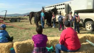 East Helena kids learn more about agriculture
