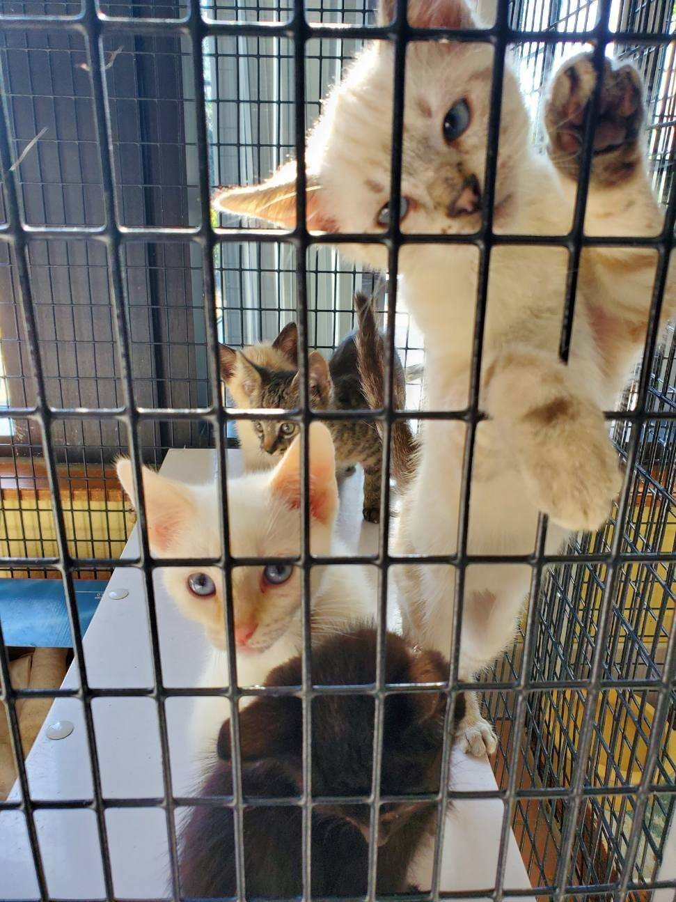 Kittens 2.jpg
