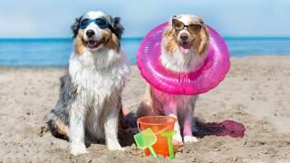 CR-Money-Inlinehero-cost-of-bringing-pets-on-vacation-0219.jpg