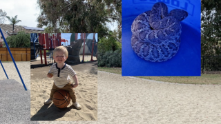 Father describes toddler's close encounter with rattlesnake at Carlsbad park