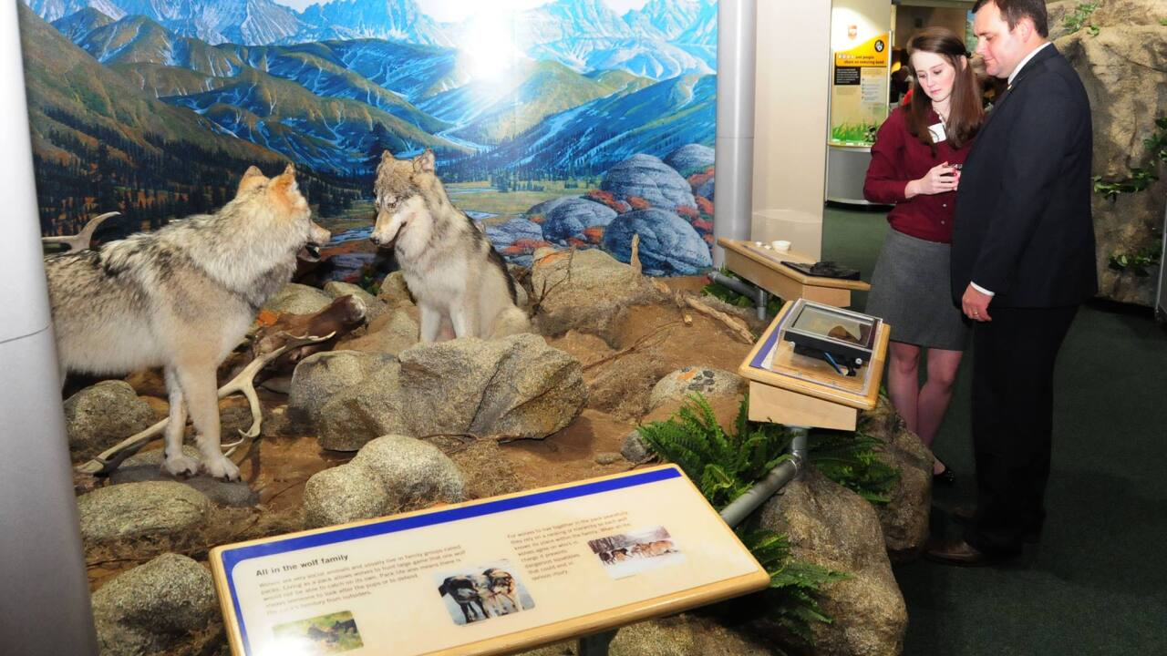 Visit 'The Story of Dogs' exhibit at the Virginia Living Museum through May