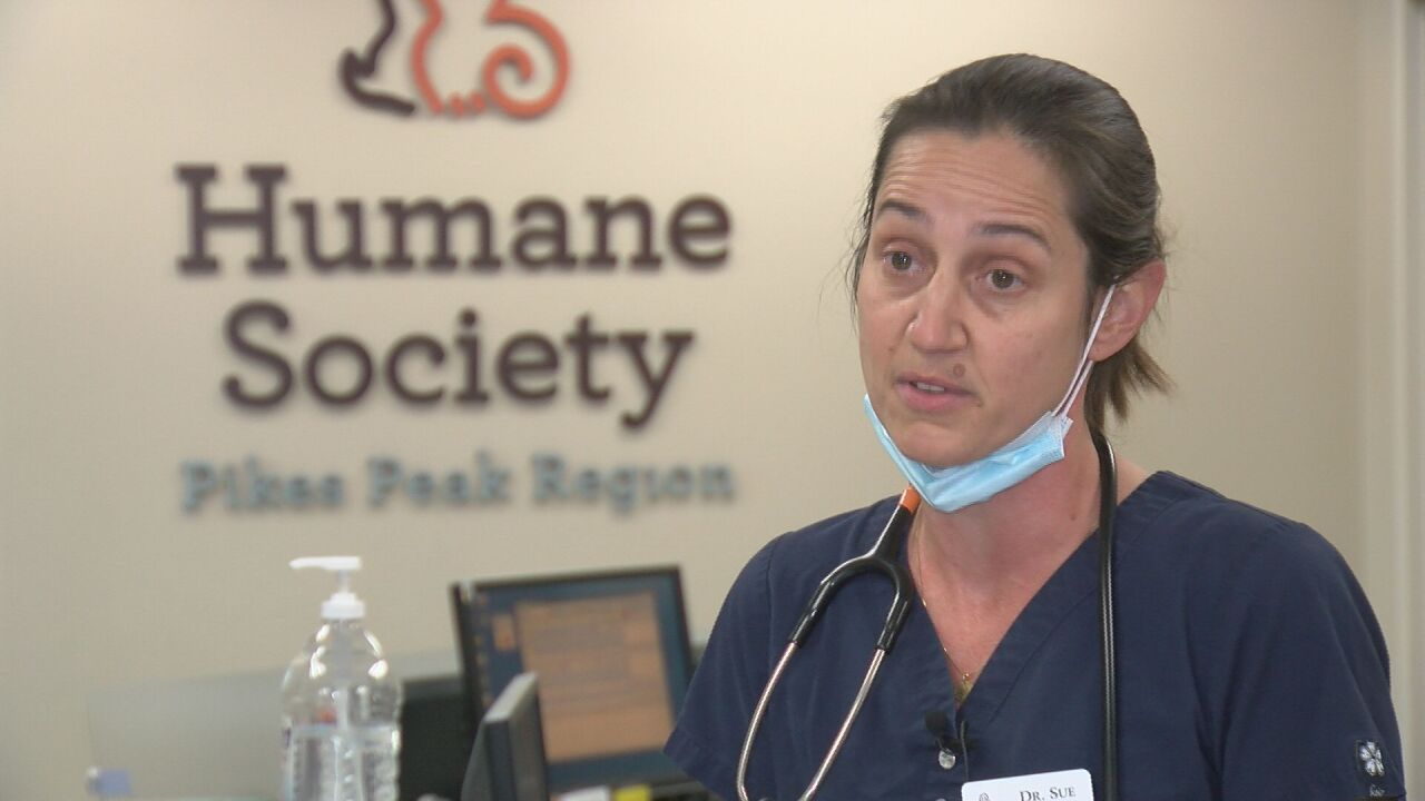 Sue Lynch, HSPPR chief veterinarian