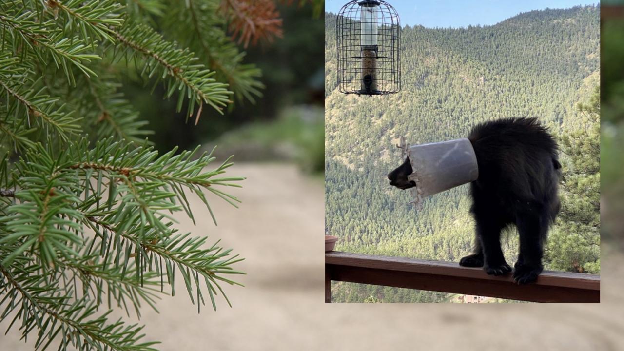 Bear with bucket on its head