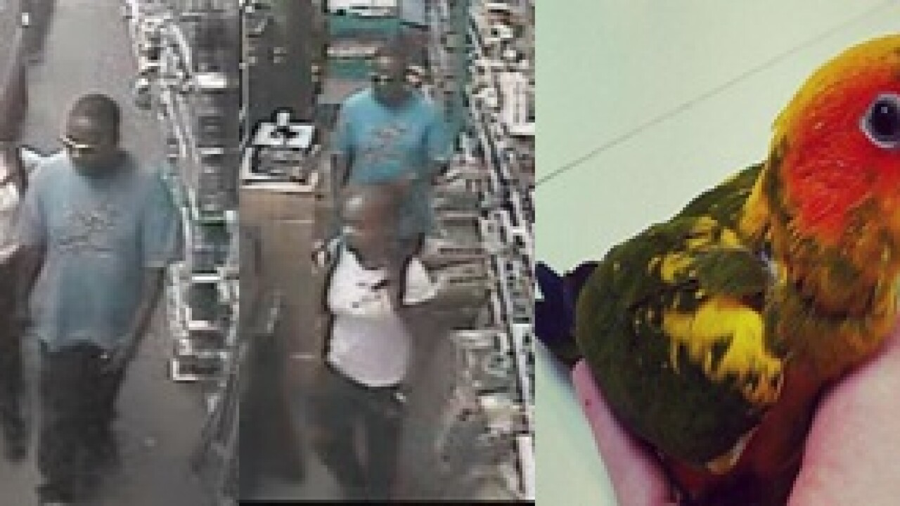 Exotic bird, bearded dragons stolen from Chesapeake pet store