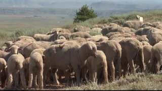 Montana Ag Network: New MSU sheep extension specialist excited to build legacy