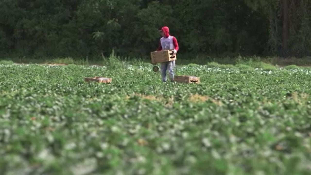 U.S. farmers hit hard by coronavirus fallout