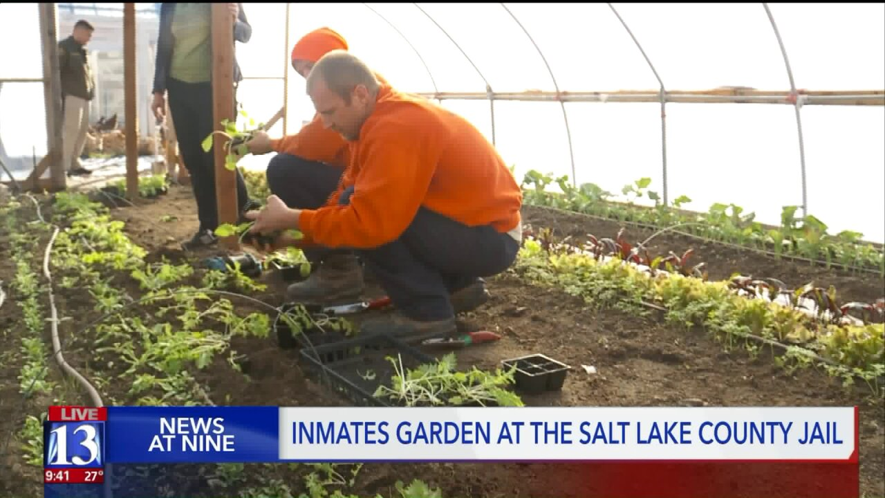 Salt Lake County inmates growing produce to benefit themselves andcommunity