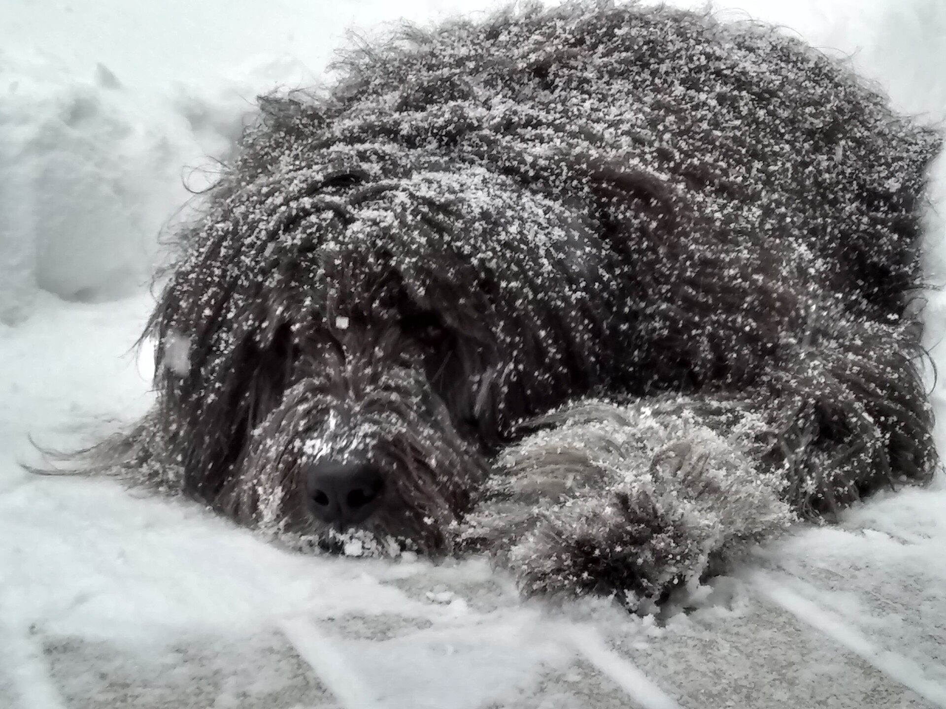 Grizzly loves the snow