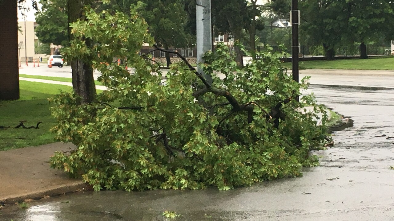tree down Linwood and MLK Blvd.