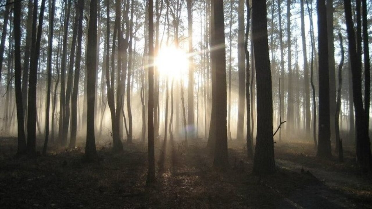 The Great Dismal Swamp: history on how slaves utilized the area
